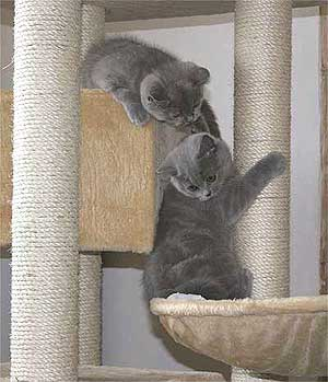 jouet chat appartement